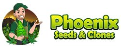 phoenix marijuana clones